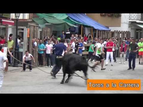 Toros ensogados Beas de Segura y Arroyo del Ojanco (Jaén) 2015