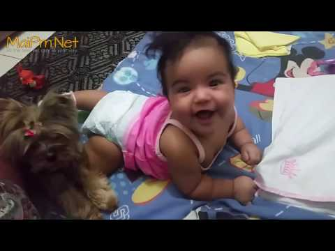 Dogs Protecting Babies Kids - Loyal Dog Doesn't Allow Anything Danger to the Owner - UCVQU_XpURRlrDbvnQJIwLag