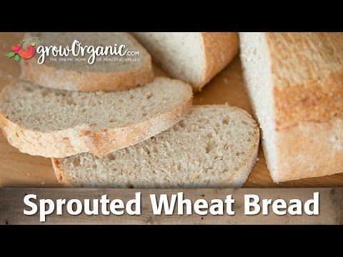 How to Make Sprouted Wheat Bread at Home