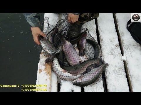 рыбалка в пирогово платник савельево 2
