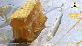 <span>Sedikit tentang Sarang lebah</span>