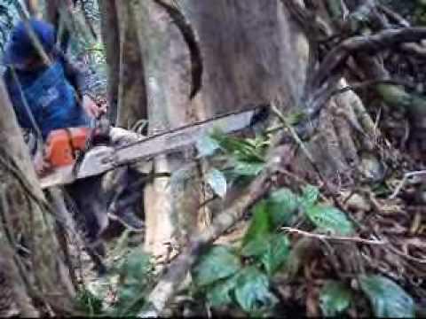 Barranquita, Grupo Romero continúa deforestación