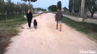 Orazio e la passeggiata al guinzaglio