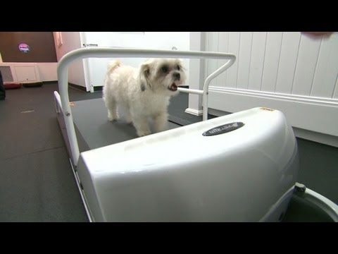 $200-a-night luxury hotel room for pets