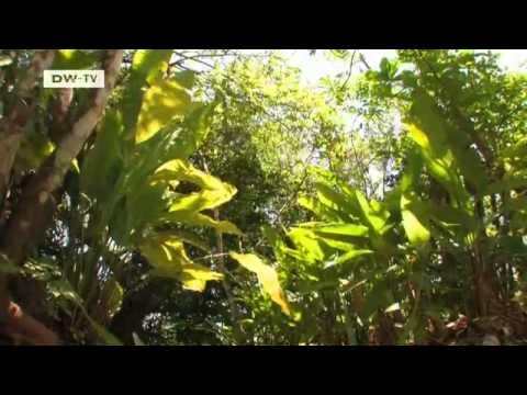 Paraísos naturales en Costa Rica