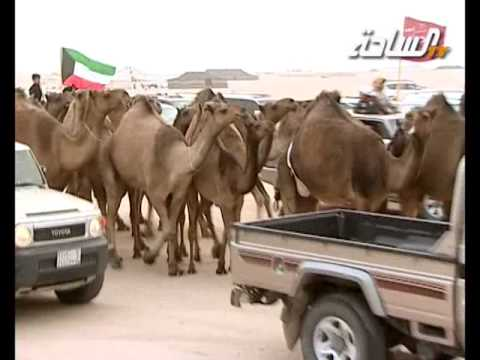 مزاين الكويت 2014 | موجعات | مسيرة منقية / ناصر بن محراك العجمي