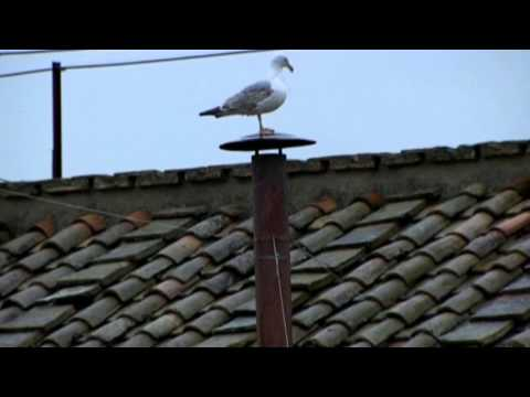 Pope Watch: Seagull Steals Spotlight Atop Vatican Chimney