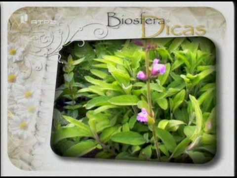 Biopesticidas no Biosfera