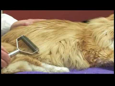 How To Remove Matted Fur From A Cat