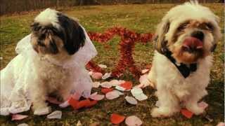 Cute Puppy Love, Everybody by Ingrid Michaelson (cover)