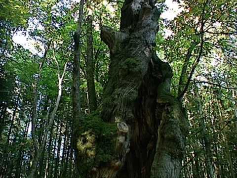 Un Parco dell'Anima: il Parco Nazionale delle Foreste Casentinesi