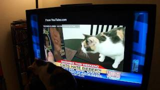 Cat watches herself on national television!
