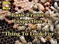 Inspecting A Bee Hive Frame