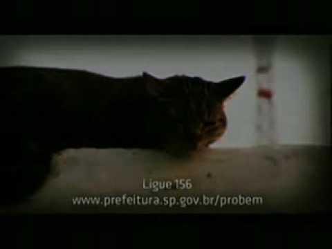 Abandono Campanha da Prefeitura de São Paulo 2009 - Exerça Posse Responsável e Não Abandone