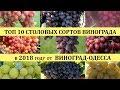 ТОП 10 ЛУЧШИХ СОРТОВ ВИНОГРАДА  2018 года(Top of the best grapes in 2018), лучшие сорта винограда