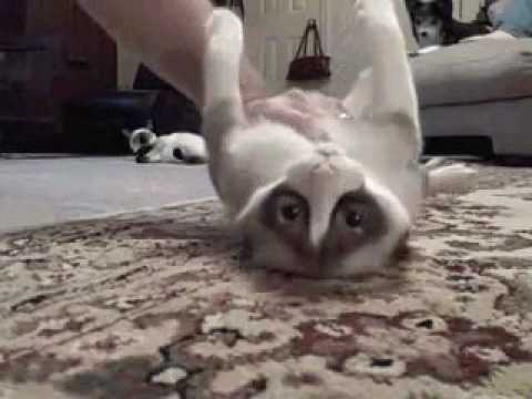 Kad mačke padaju kao kruške...