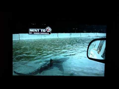 Hurricane Irene shark in the street.