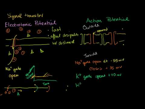 Electrotonic and Action Potentials