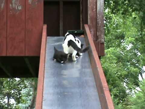 Kittens on a Slide