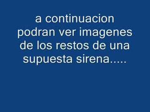 Videos de sirenas vivas - Imagui