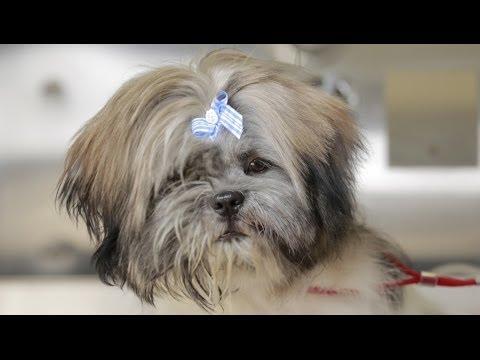 Homeless Dog Gets Makeover That Saves His Life! - Joey - UCPIvT-zcQl2H0vabdXJGcpg
