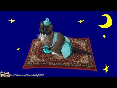 شاهد بالفيديو: القطة الاميرة تحلق على بساط الريح
