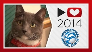 Project for Awesome 2014: International Animal Rescue