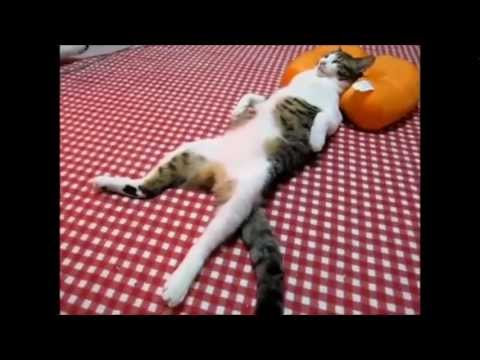 funny cats compilation 2012