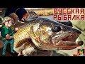Русская Рыбалка 4 - Хочу поймать трофейного Судака