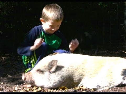 Pet Pig PLEASE?