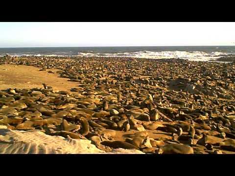 ナミビアの衝撃ビーチ!ケープクロス♪