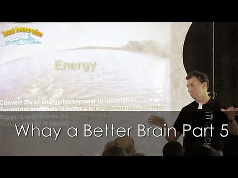 TI Swimming Faster Presentation Part 5 - Whay a Better Brain is the Solution