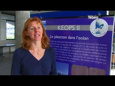 Etude sur le fitoplancton (Brest)