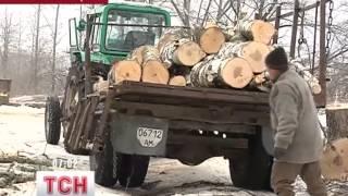На Житомирщине крестьяне восстали против вырубки леса