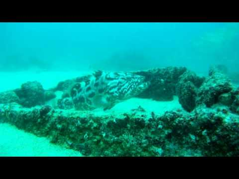 Wreck Dive in Cabo Pulmo, Baja California Sur, Mxico