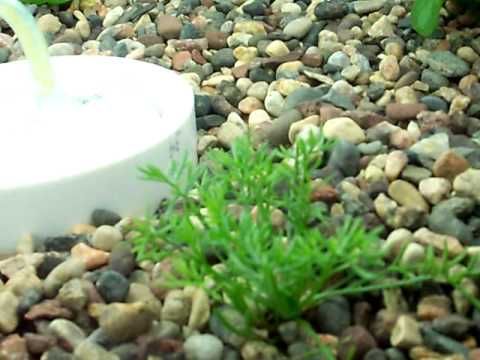 Dorm Room Aquaponics Update 4-7-2011
