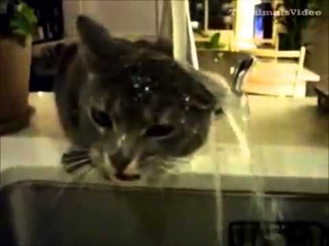 Funny Crazy Cats Compilation