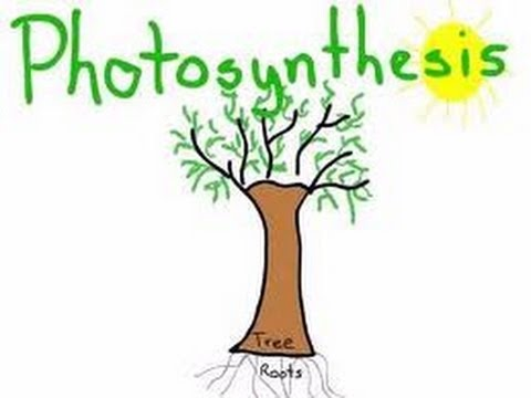 Photosynthesis - Full Lesson - Kids-www.makemegenius.com -One of the best Indian education website