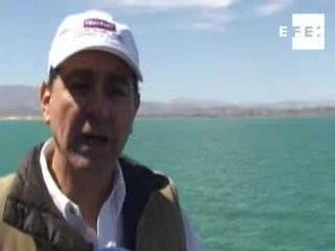 México intenta impedir la inminente extinción vaquita marina