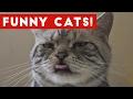 funny cat videos compilation 2017 | funny pet videos