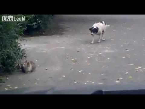 Hond pest kat