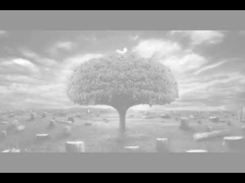 El Último Árbol - Gaia Dreams - Proyecto so2s