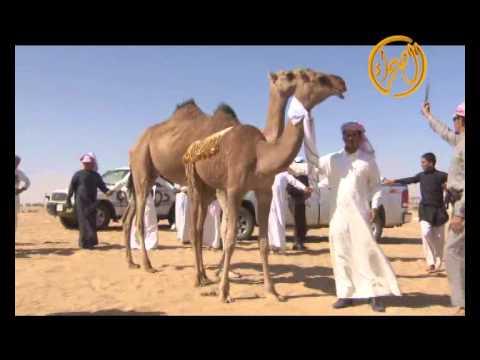 زعامة فردي الشيخ صالح بن مهدي بن غيدان ال راكه اداء الشامخ حصين اليامي