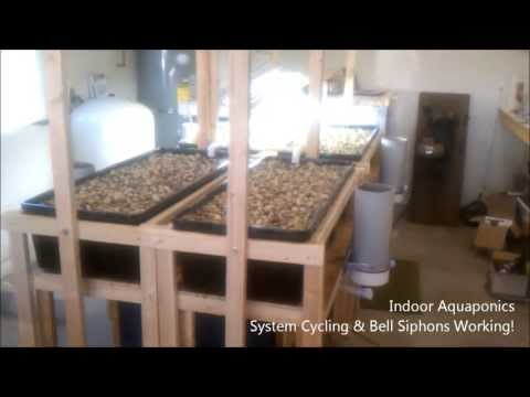 Indoor Aquaponics - System Cycling and Bell Siphons Working