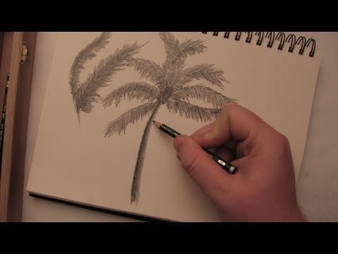 How to Draw a Palm Tree in Pencil