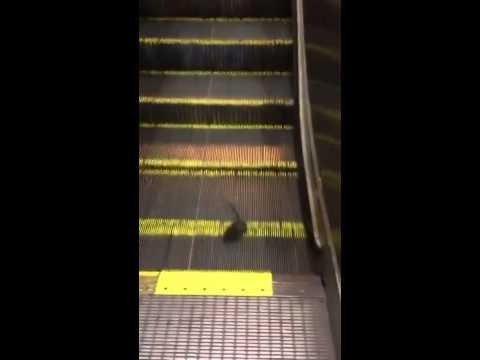 一個老鼠搭扶手電梯的結果
