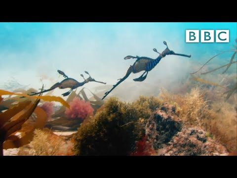 Wonderful World With David Attenborough - BBC One