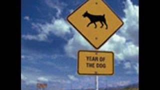 25 - Žlutý pes - Náruživá
