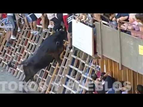 Concuso de Ganaderías de Segorbe 2014 La Paloma