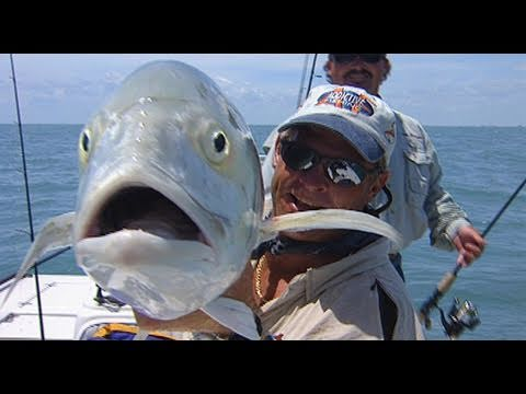 Space Coast Blast Off - HUGE black drum and redfish